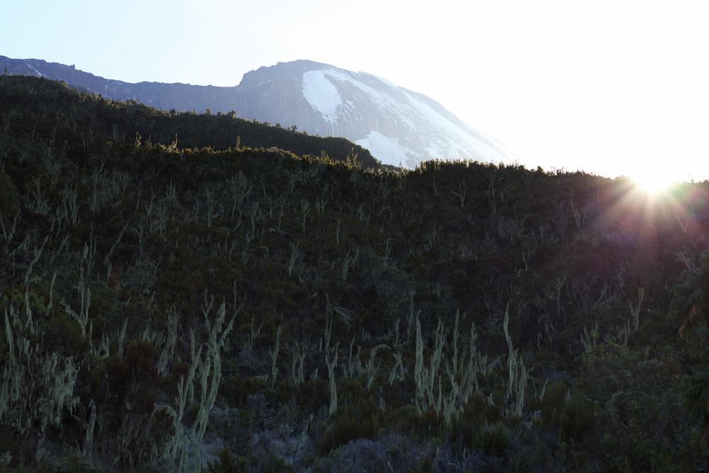 Mt Kilimanjaro, Tanzania, Sep 2012