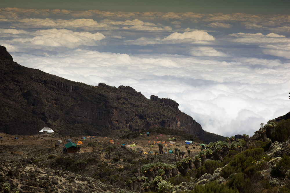 Barranco Camp, 3972masl, Kilimanjaro (TZ), Sep 2012