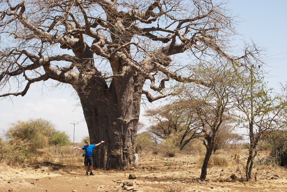Boabab tree, Tanzania