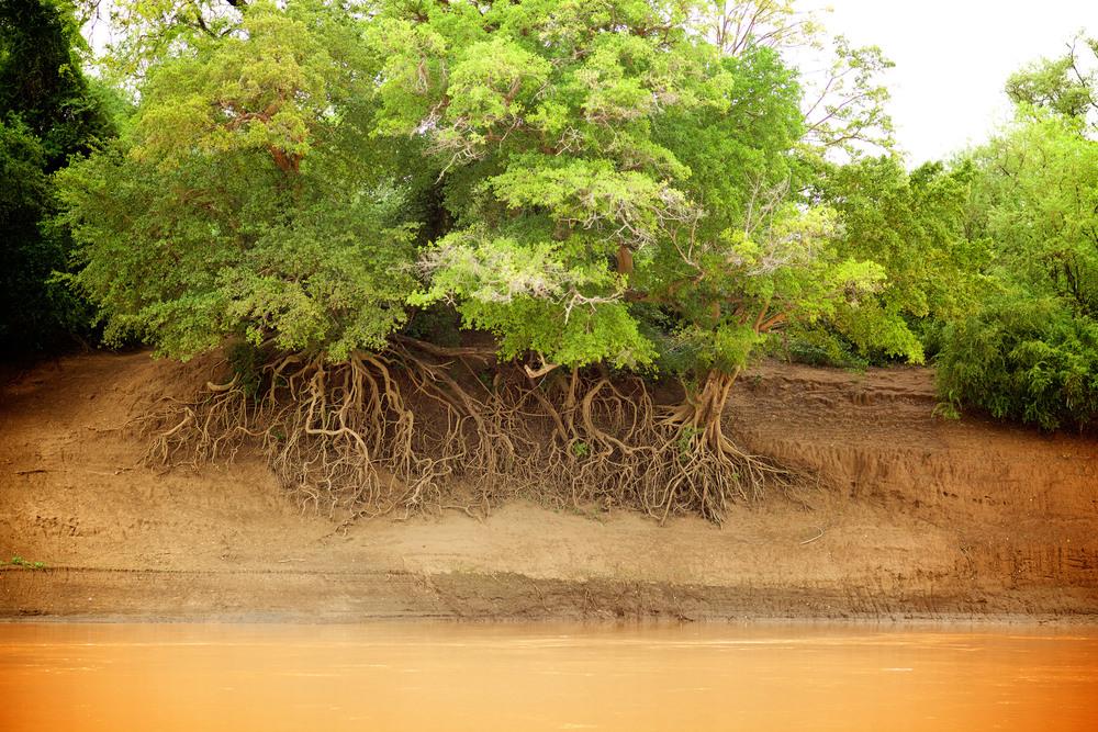 Omo riverbank