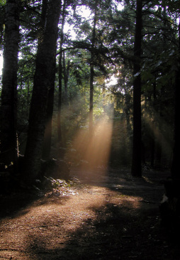 forest-light.jpg
