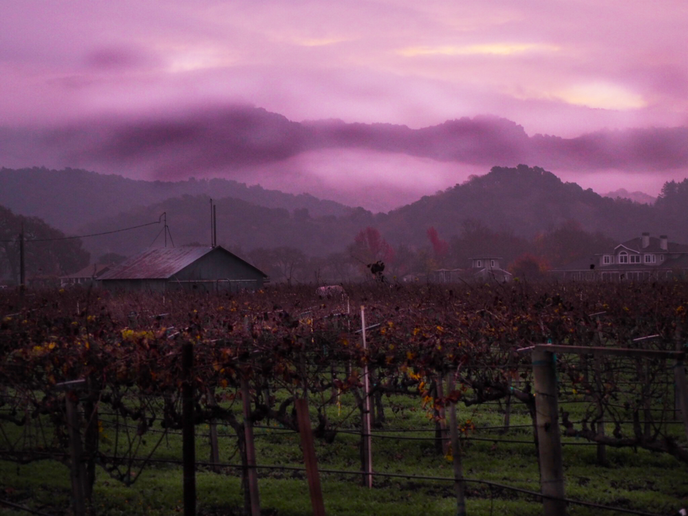 Stormy December dawn in the vineyards just east of Yountville in the Napa Valley