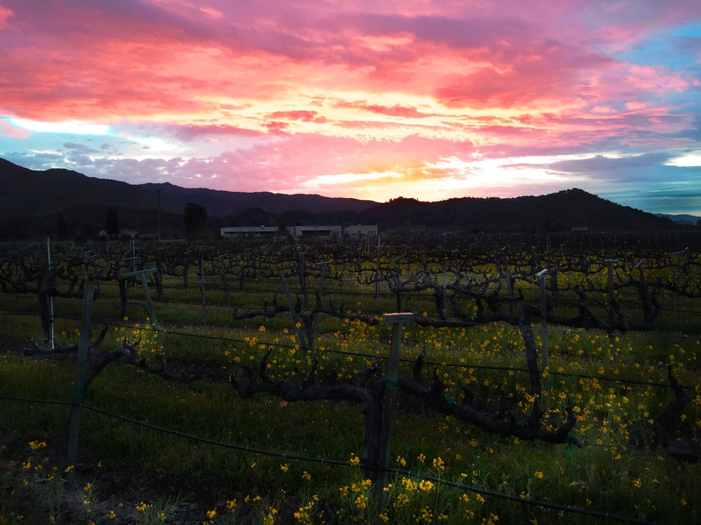 "Clouds at dawn signal the arrival of the ""Pineapple Express in the Napa Valley. Soon the spring mustard and the vines will get a good drink"