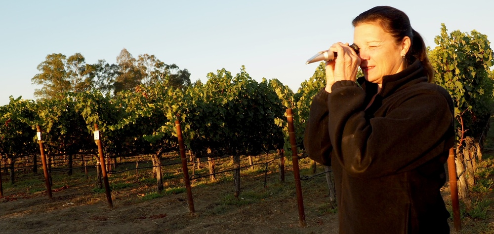 Winemaker Kari Auringer taking brix readings with a refractometer in our Kairos Block 4 Vineyard