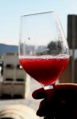 Gorgeous Corallina juice