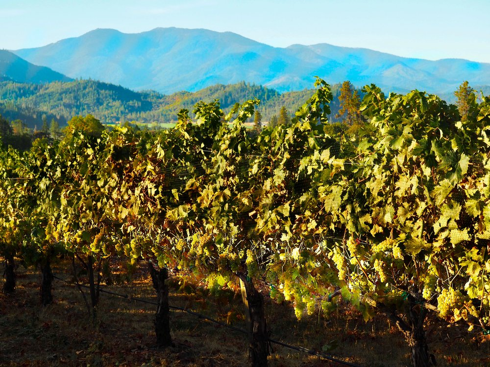 Troon Estate Vermentino framed by the Siskiyou Mountains