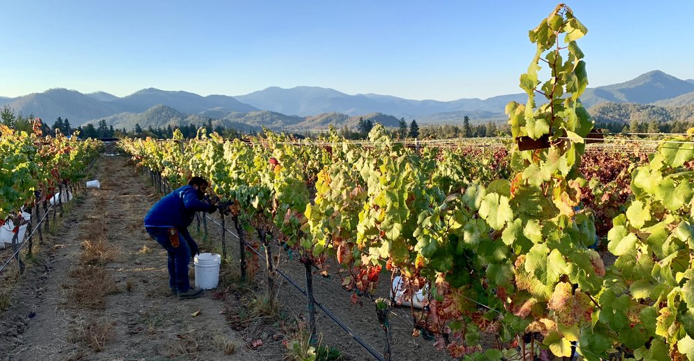 The Applegate Valley during harvest.