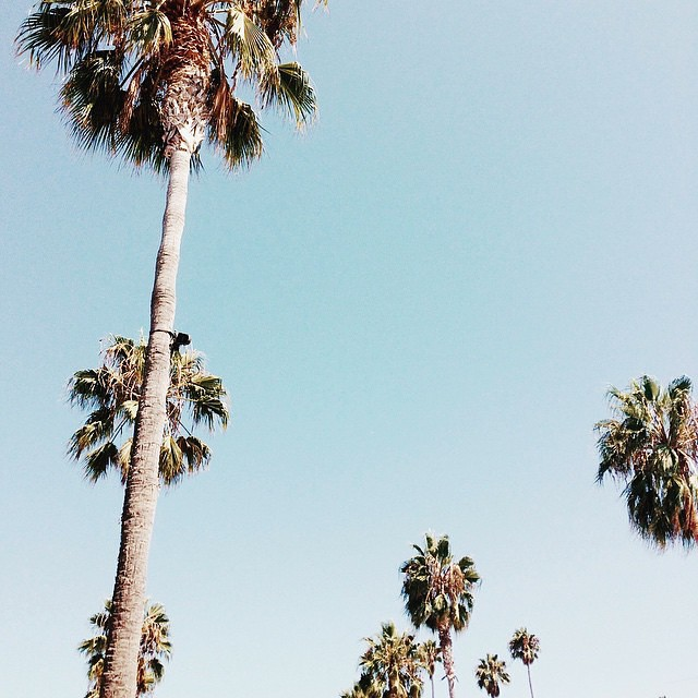 Palms on our mind. Mood #momentswithsunday from @anyeske by needsupply  http://ift.tt/1TmLJce