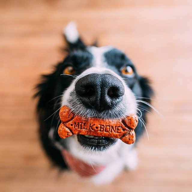 Reunited with this goofball. He gets a treat. by andrewknapp  http://ift.tt/1EznHpg