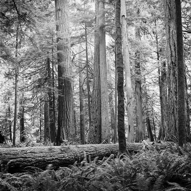 Cathedral Grove  by  Adam Garelick  on Flickr.