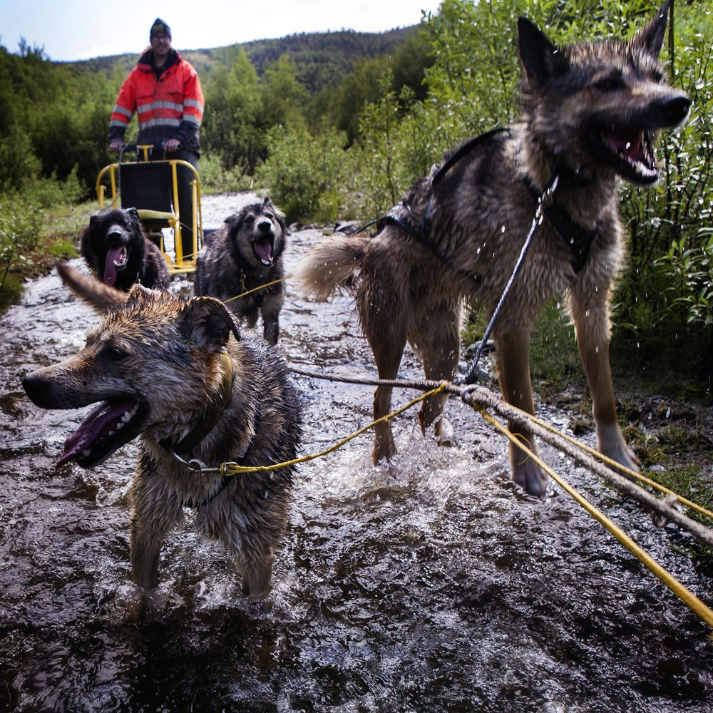 markcoatney :      newyorker :     A look at  Katie Orlinsky 's photos of Alaskan sled dogs in summer:  http://nyr.kr/1qZuS0q      Oh come on. I'm not made of stone you know