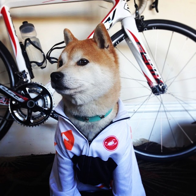 Proud cyclist. #stravaproveit photo from @daschmoop. by stravacycling  http://ift.tt/1nWNzQt