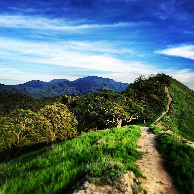 East Bay trails with Mt Diablo in the background. by sharmanian  http://ift.tt/O7IyHT
