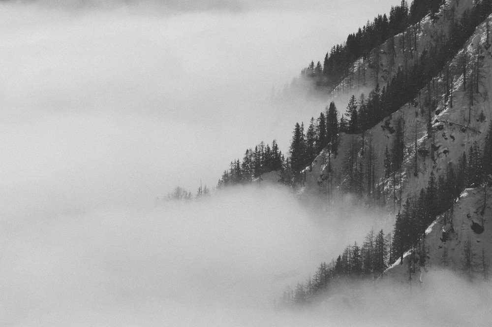 redwoodcollective :     .just like heaven. (by  luca galavotti )