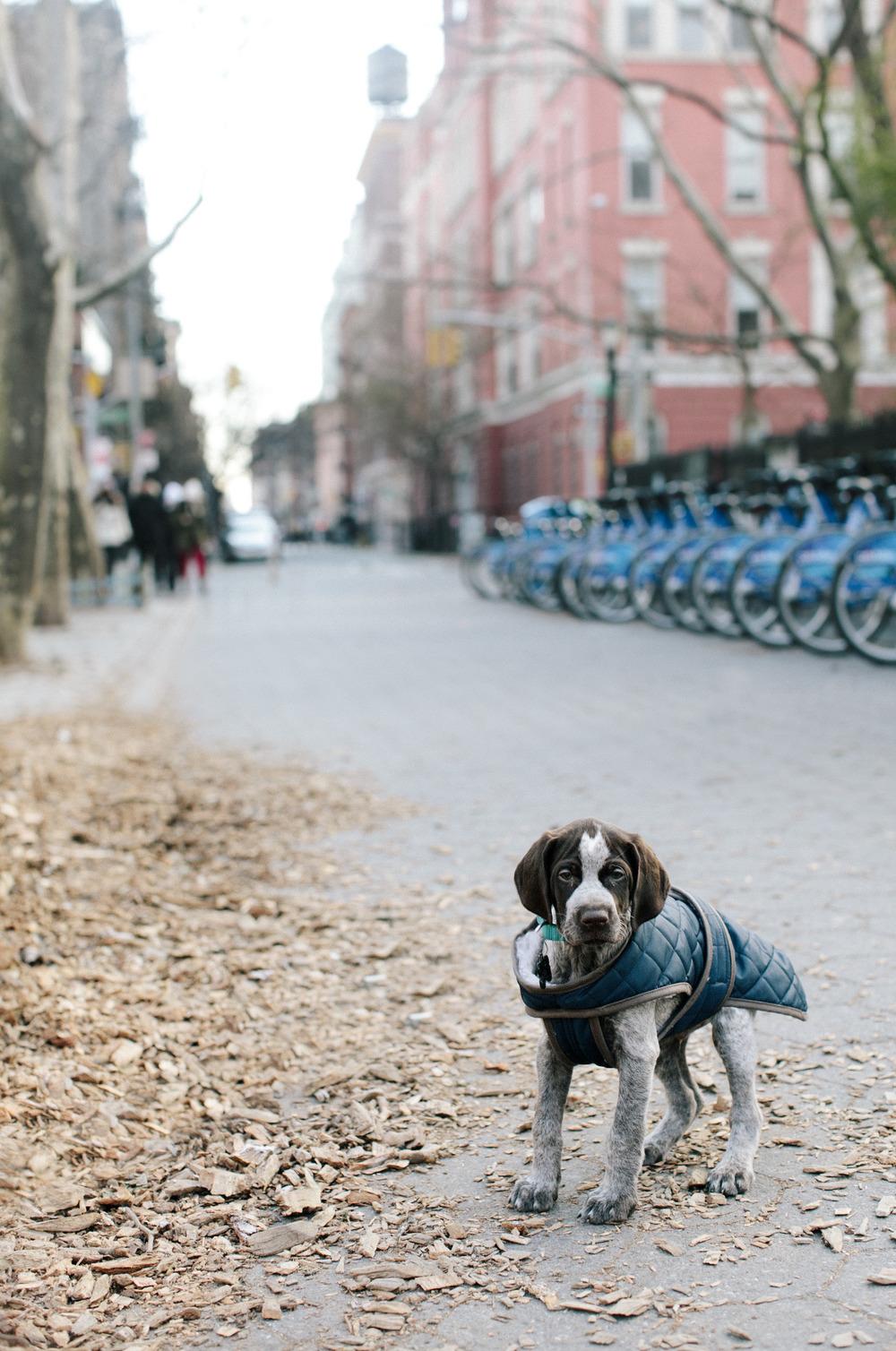 jamesnord :      Jayson's  new dog, Odin.