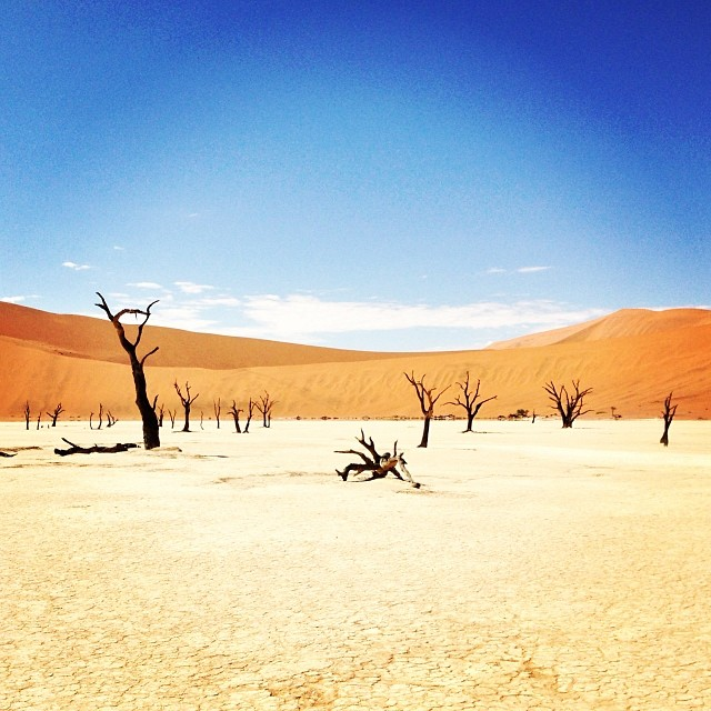 caro :     Sossusvlei: I'm only disappointed that there are no melting clocks hanging from the trees. #namibia