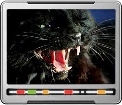 Catspaw-PADD-250.jpg