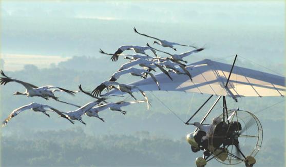 operation migration alabama