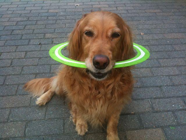 mattie's last frisbee