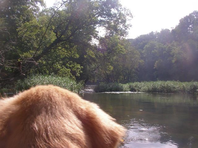 puppy's first trip down cypress creek