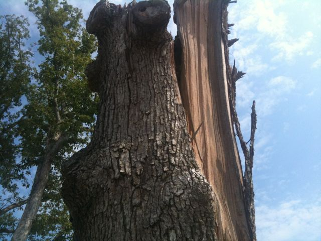 phil campbell alabama devastated tree