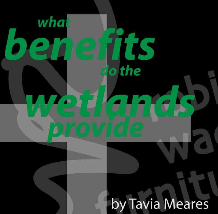 wetlands benefits