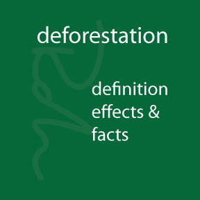 Deforestation-Definition, Effects & Facts