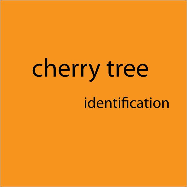 Cherry Tree Identification