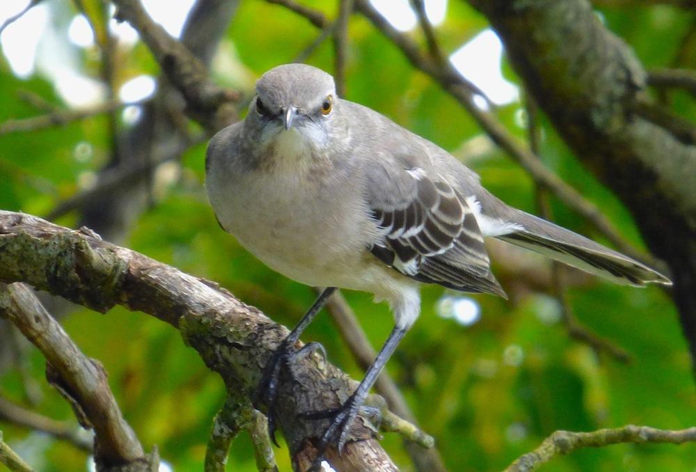 birdstraighton.JPG