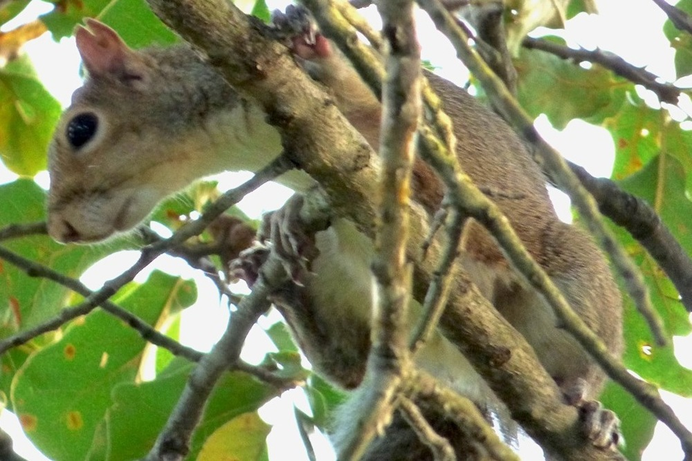 squirrel closeup.JPG