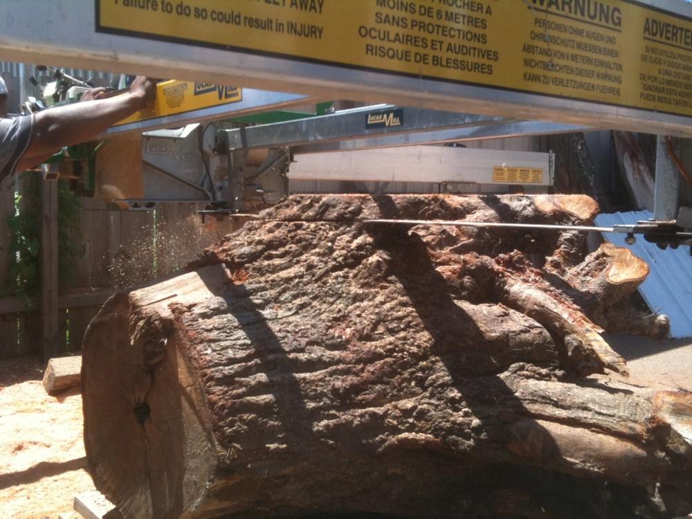 walnut-stump-sawmill 4096.jpg