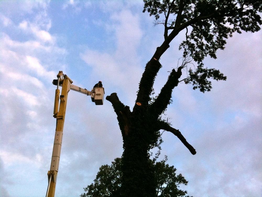 tourism oak lectern2.JPG