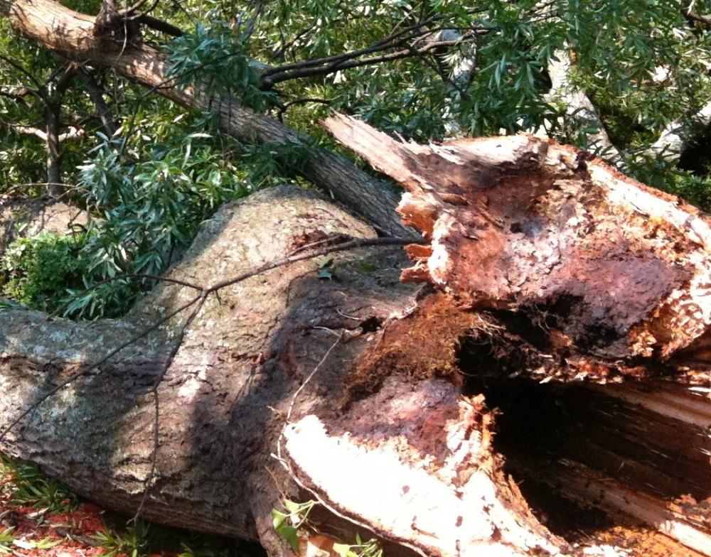 tourism oak lectern1.JPG