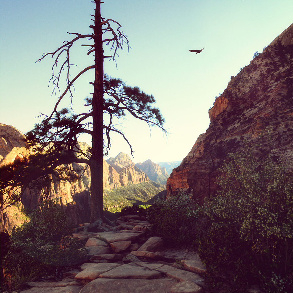 A hawk soars high above Zion and this lone tree on the ascent to Angels Landing.