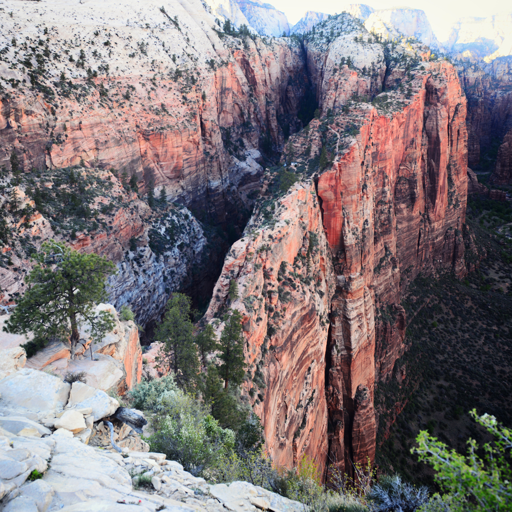 The spine leading to Angels Landing as seen looking back. Those are 1500 ft. drop-offs on either side.