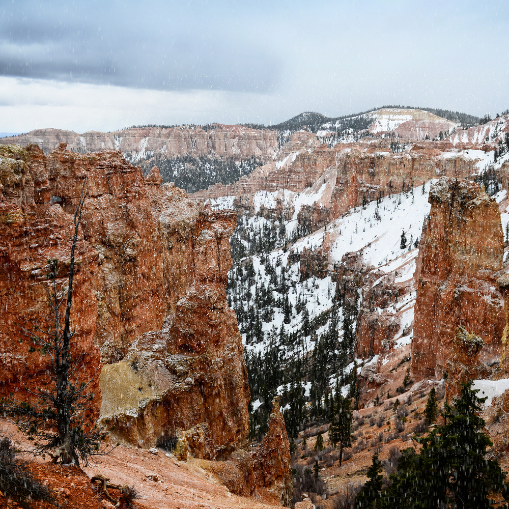Snow falls heavily on the hoodoos of Bryce Canyon.