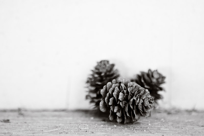 Mini pinecones found on a covered bridge.
