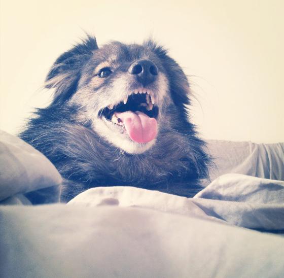 Indy dog.jpg