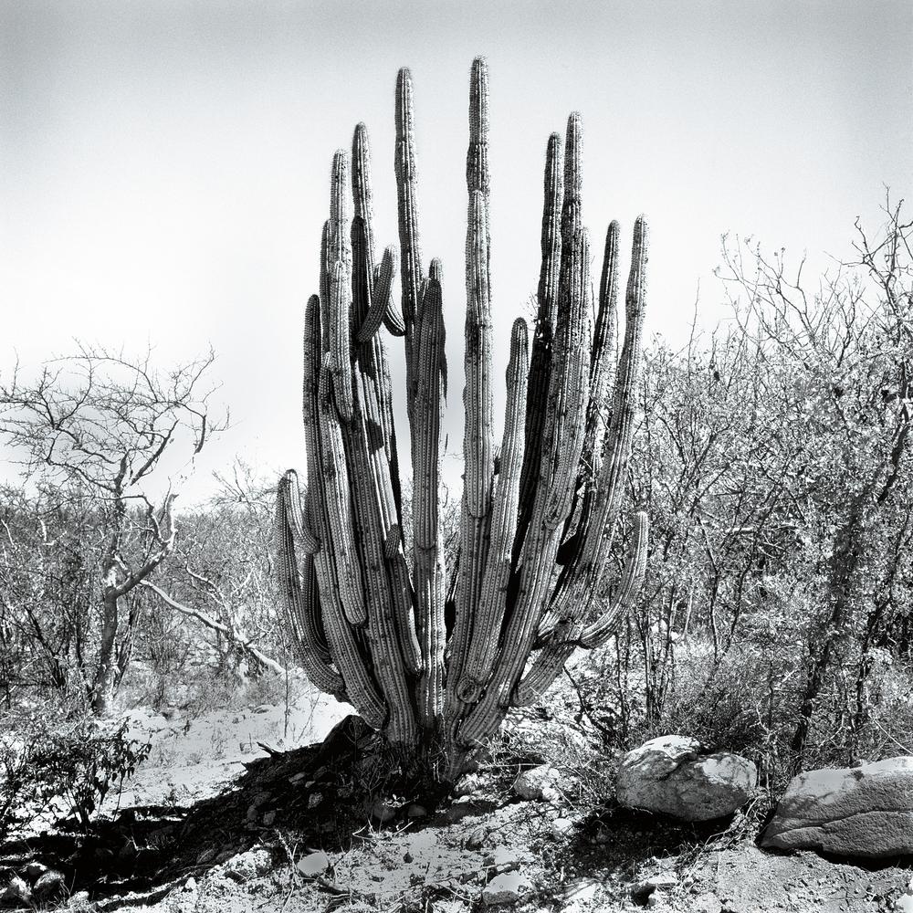 Los Cabos, B.C.S. Mexico