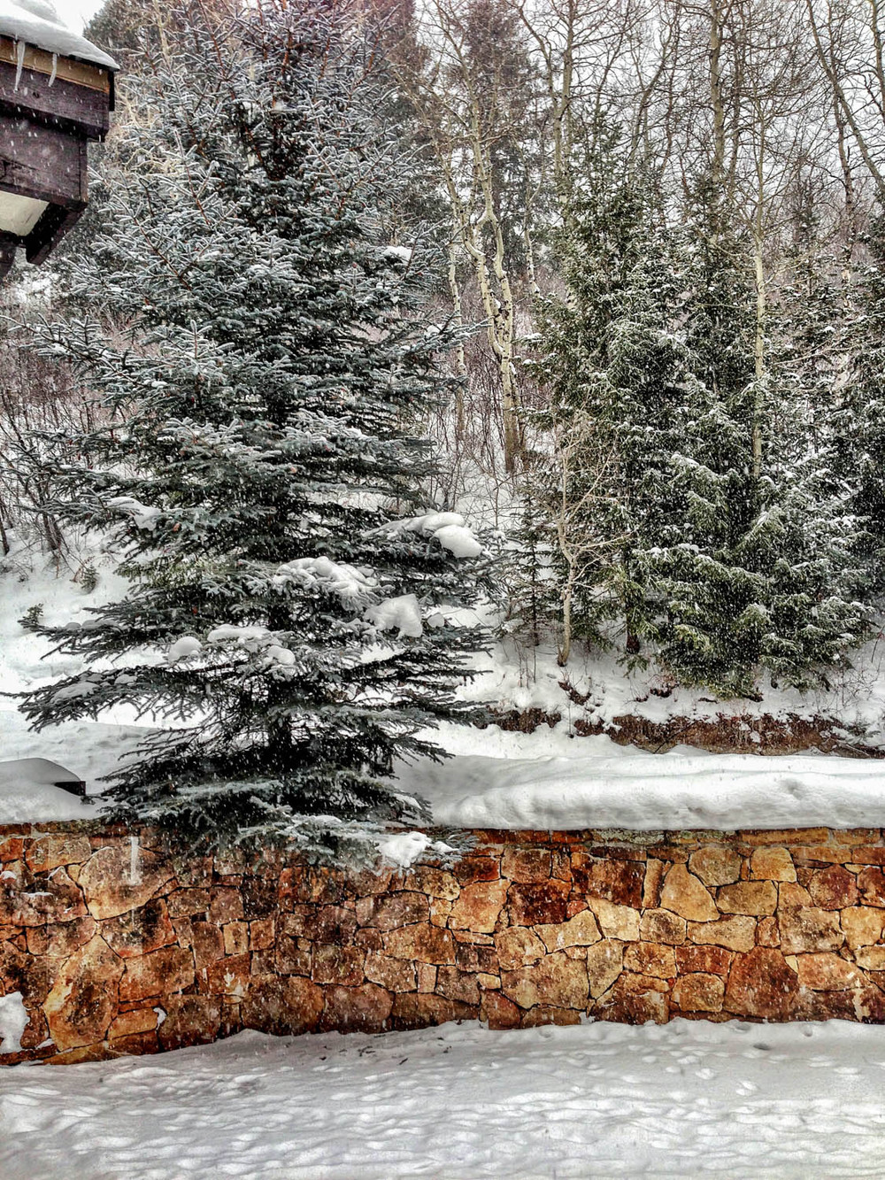 I was drawn to the texture of stone in the wall and the contrast between the trees and snow.