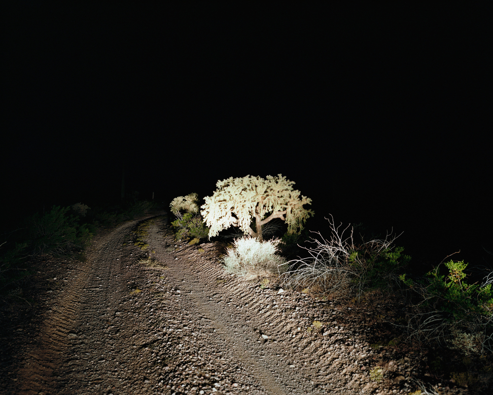 Nighttime Cholla, Barry M. Goldwater Bombing Range East, Arizona