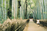 Photo of Bamboo 'Forest Therapy' in Japan -Creative Commons