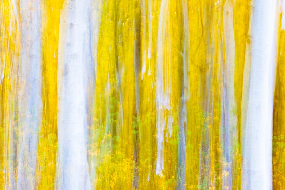 Munch's Aspens