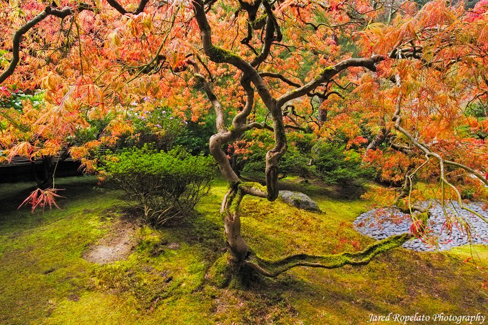 Tea Garden Tree