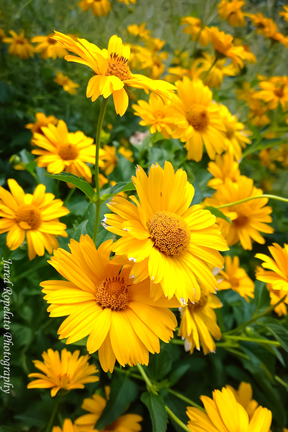 Yellow Nokia Lumia 1020 Web.jpg