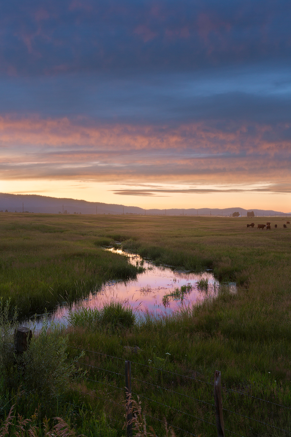 Cow Creek