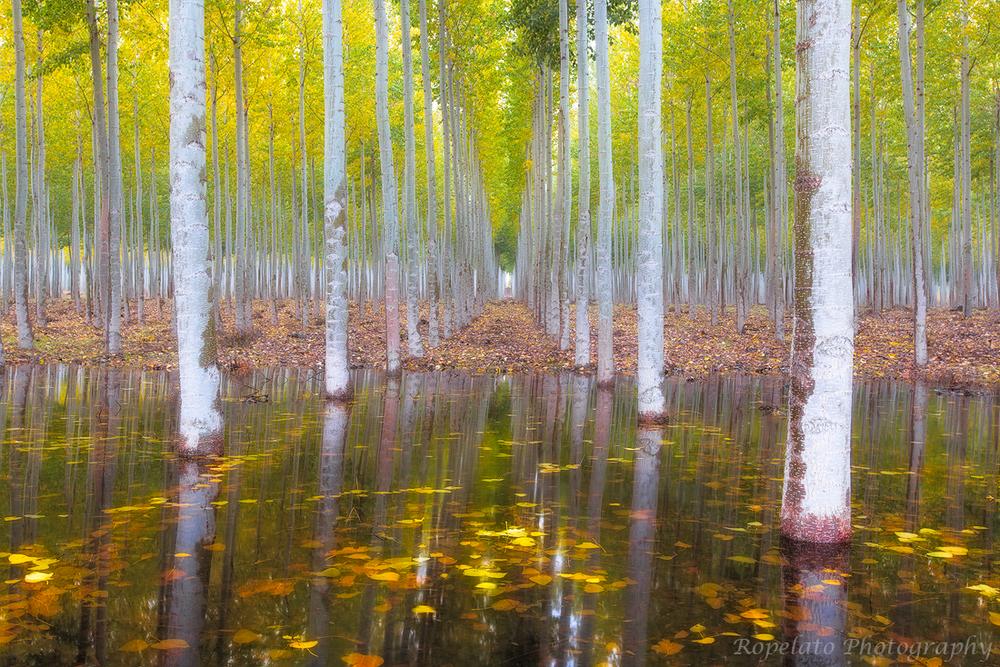 Mirror Mirror in the Fall