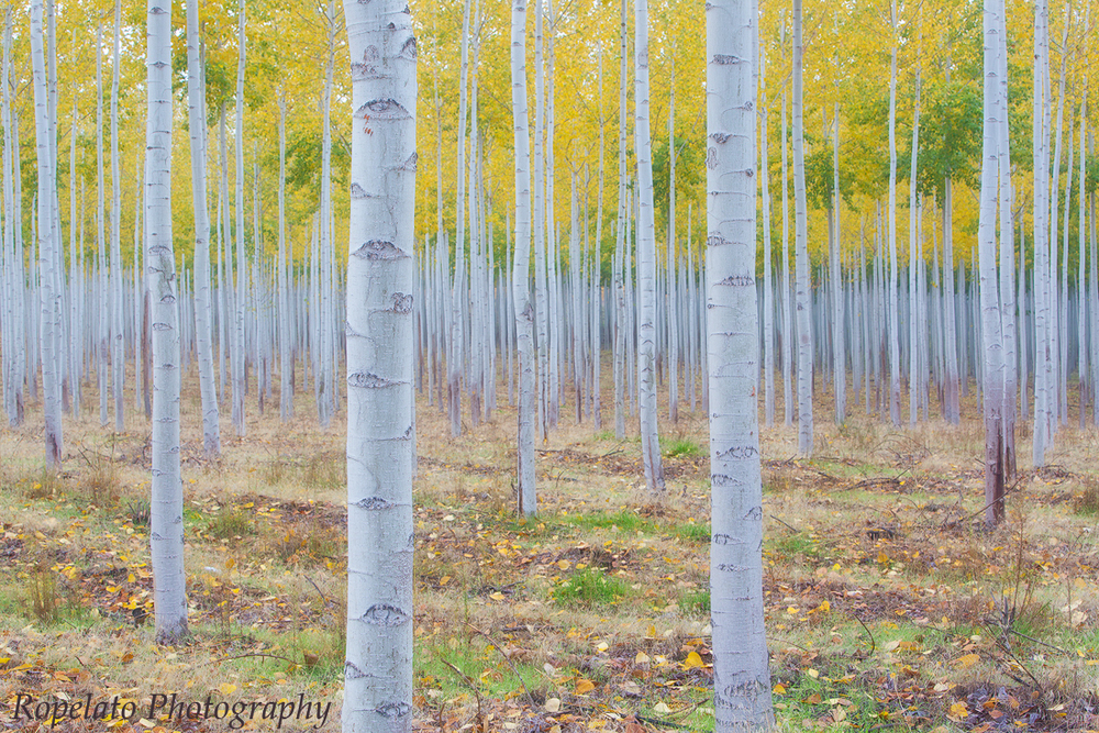A shot from the Boardman Poplar Grove edited on the SP3.