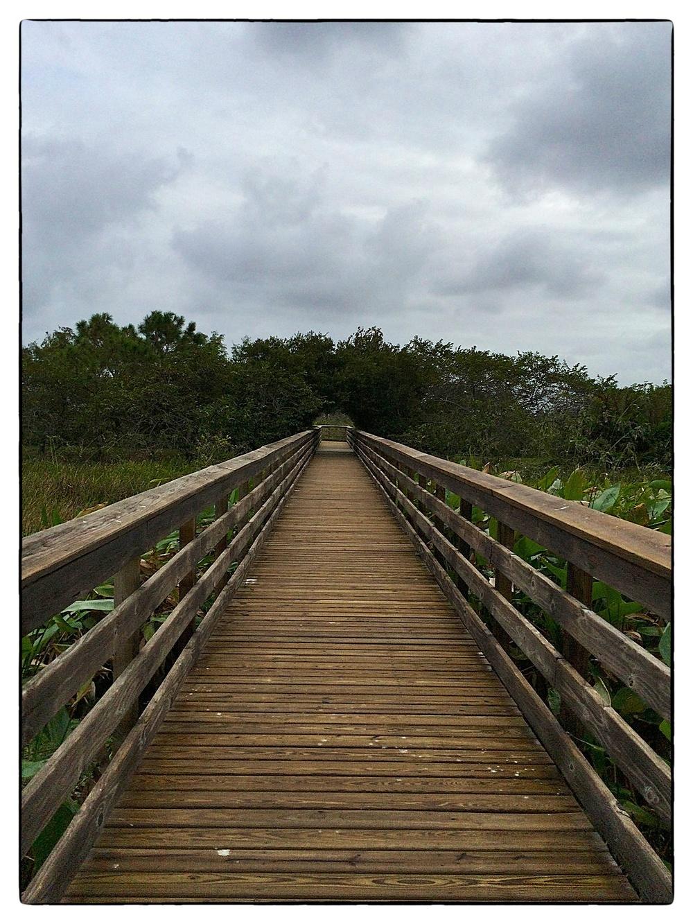 "Strolling the ""boardwalk"" at Wakodahatchee Wetlands in Delray Beach, Fla., shot on November 5, 2013."