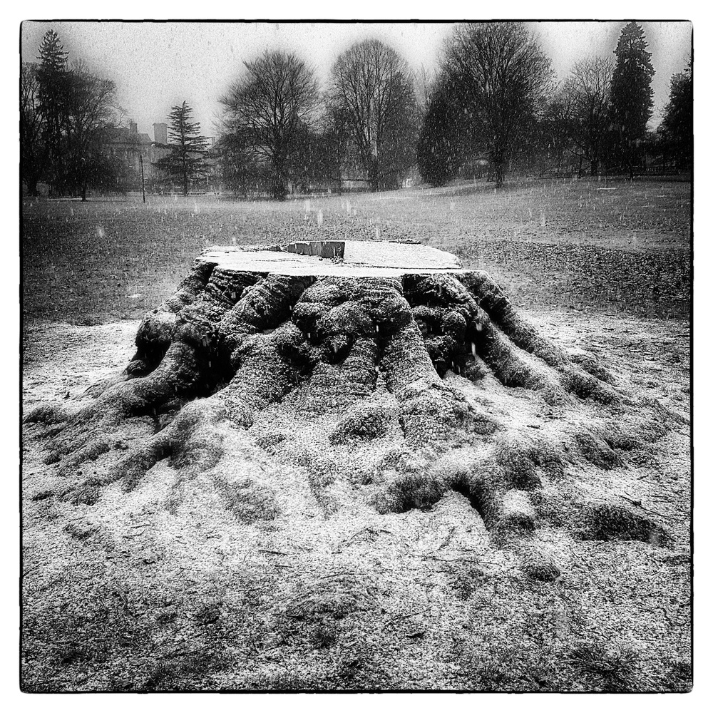 Snow begins to fall on tree stump in Wilcox Park, Westerly, R.I., shot December 10, 2013.